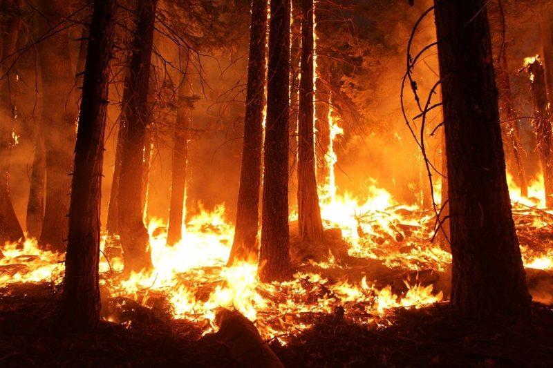 incendios forestales y deforestación