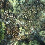 Volcanes Submarinos: [Características, Ejemplos e Imágenes]🗻