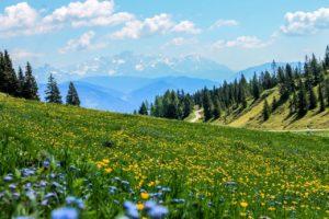 ¿Qué flora hay en una pradera de montaña?