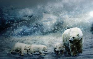 Animales de la región Ártica