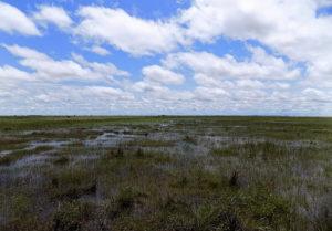 ¿Cuáles ecorregiones terrestres están en peligro? Sabana inundada
