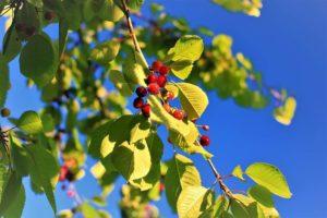 La flora en el ecosistema de Grandes Lagos