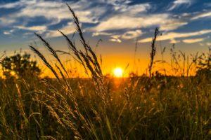 ¿En qué se traduce el efecto de la tecnología en el medioambiente? Uso en la agricultura
