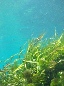 Flora en las aguas polares