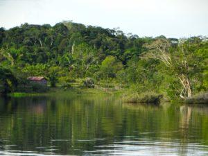 ¿Cómo es el suelo de las llanuras aluviales? Amazonas