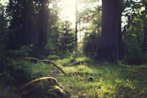 ¿Qué flora hay en un bosque templado de frondosas?