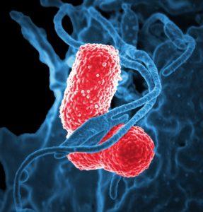 ¿Cómo se clasifica el dominio de las bacterias? Según respuesta a la tintura
