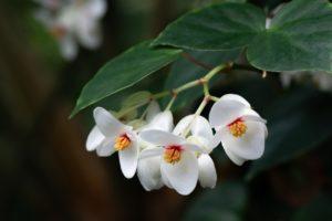 ¿Qué flora tienen las zonas con clima tropical?