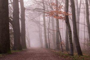 ¿Cómo es el suelo de un bosque templado de frondosas?