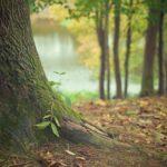 Bosque Seco: [Características, Fauna, Flora y Temperatura]