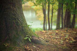 ¿Qué es el bosque seco?