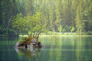 ¿Qué flora y fauna predomina en los Grandes Lagos?