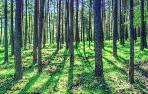 Ubicación geográfica de los bosques mediterráneos