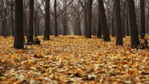 ¿Qué característica tiene un bosque seco?