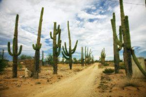 ¿Cómo es la flora en zonas con clima desértico?