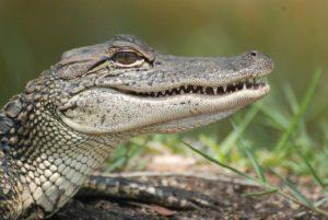 ¿Qué fauna predomina en las llanuras aluviales?