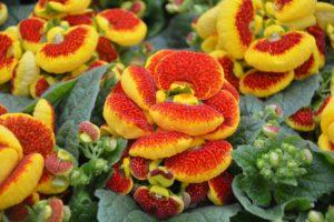 ¿Qué flora hay en una meseta?
