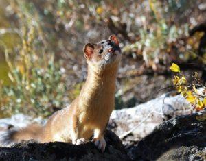 ¿Qué fauna predomina en una pradera?