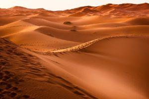 ¿Cuáles ecorregiones y ecozonas existen? Desierto del Sahara