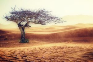 ¿Qué es el clima desértico?