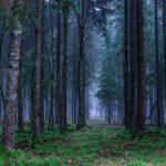 Bosque Templado de Frondosas: [Características, Fauna, Flora y Temperatura]
