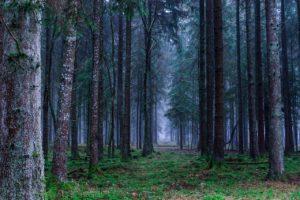 ¿Qué es un bosque templado de frondosas?