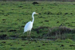 ¿Qué fauna predomina en una sabana inundada?