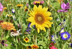 ¿Qué flora hay en una pradera?