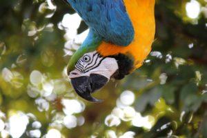 ¿Qué fauna predomina en la selva lluviosa?