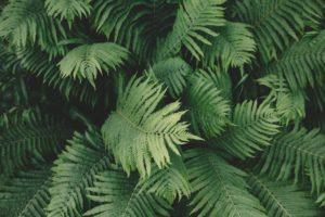 ¿Qué flora hay en un bosque subtropical de coníferas?