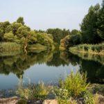 Llanuras aluviales: [Características, Fauna, Flora y Temperatura]