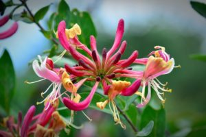 ¿Qué flora hay en los grandes deltas?
