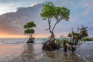 Flora en los manglares