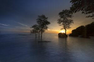 ¿Qué flora predomina en las zonas con clima costero?