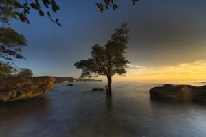 ¿Qué caracteriza a la flora y fauna de los manglares?