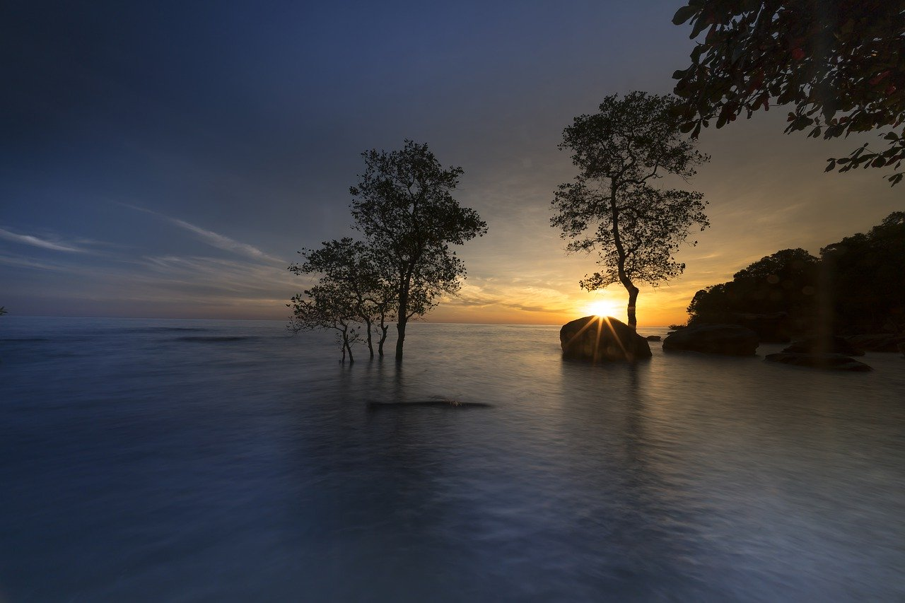 ¿Qué son los manglares?