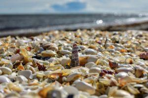 ¿Cómo es el suelo en zonas con clima costero?