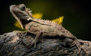 ¿Qué fauna predomina en los bosques secos?