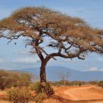 Sabana: [Características, Fauna, Flora y Temperatura]