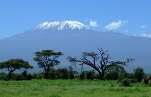 ¿Cuáles ecorregiones terrestres están en peligro? Región Afrotropical