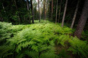 ¿Cómo es el suelo en la selva lluviosa?