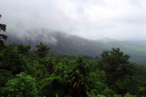 ¿Qué es la selva lluviosa o bosque pluvisilva?