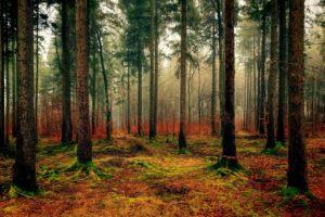 ¿Cómo es el suelo de un bosque seco?