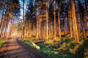 ¿Cómo es el suelo en un bosque subtropical de coníferas?