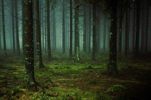 ¿Cómo es el suelo en un bosque templado de coníferas?