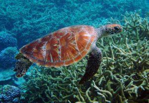 ¿Qué fauna predomina en las islas oceánicas?