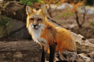 ¿Qué fauna predomina en una meseta?