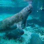 Animales Acuáticos en Peligro de Extinción: [Principales Características]