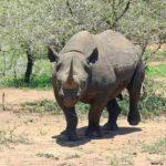 ¿Cuáles son las Causas que Provocan la Extinción de Especies?