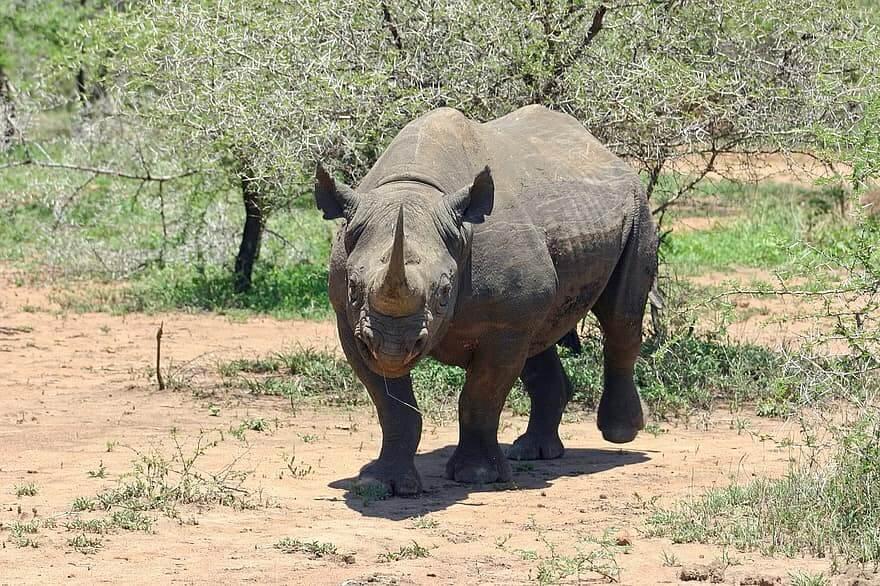 10 causas que provocan la extinción de especies